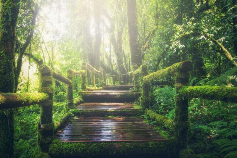 parco-avventura-lombardia_800x534